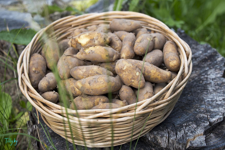 Картошка в корзинке